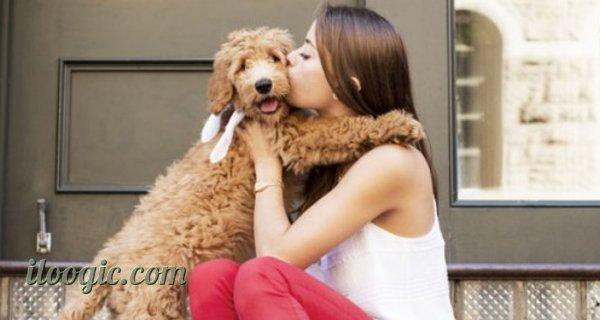 tecnologia voz perros comunicarse humanos hablar