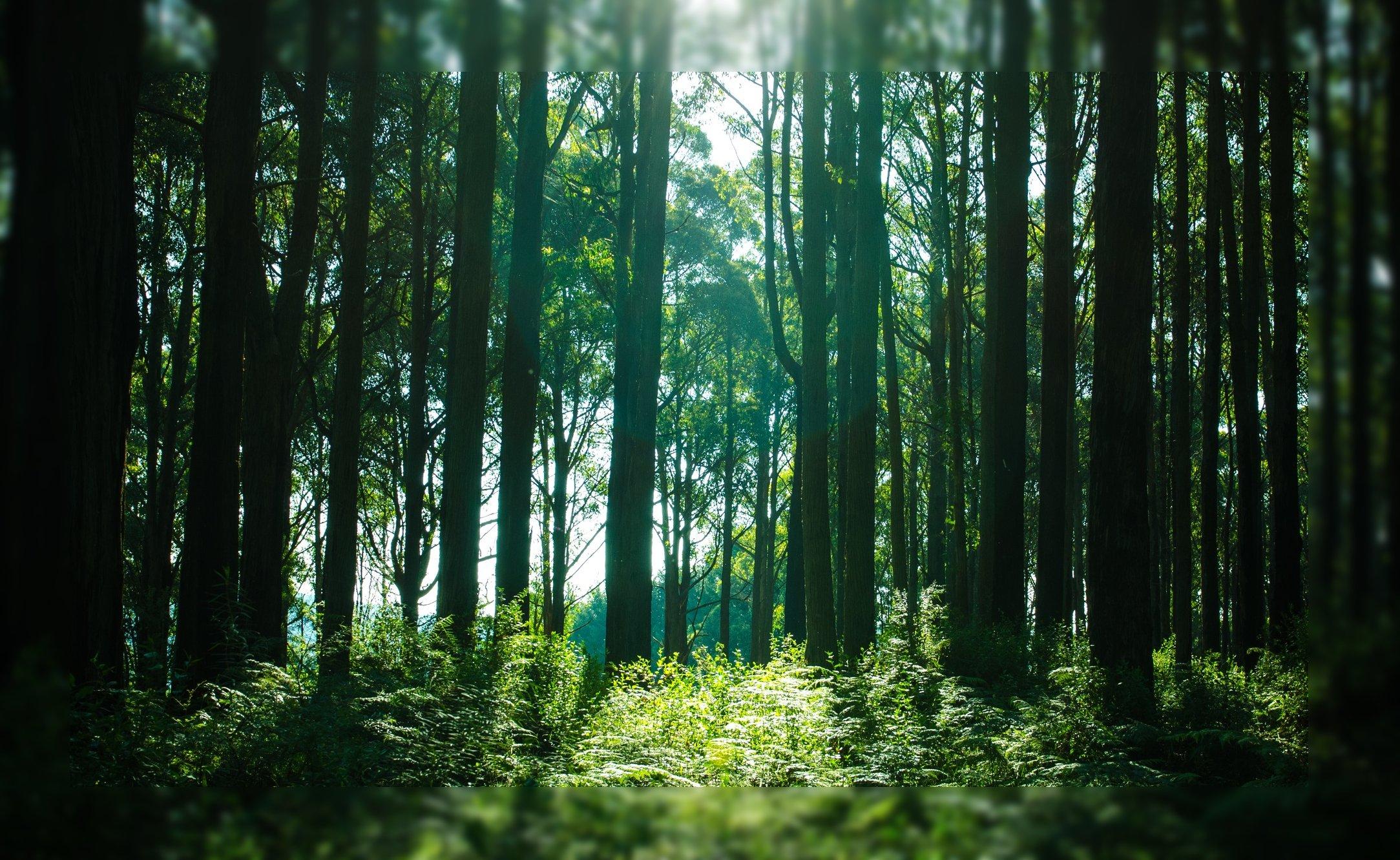 bosque personas perdidas extraviadas encontrar