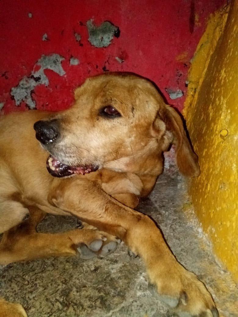 perro lastimado mandibula cohete naucalpan